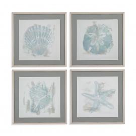 Shells of the Ocean Framed Under Glass 4pc Wall Art