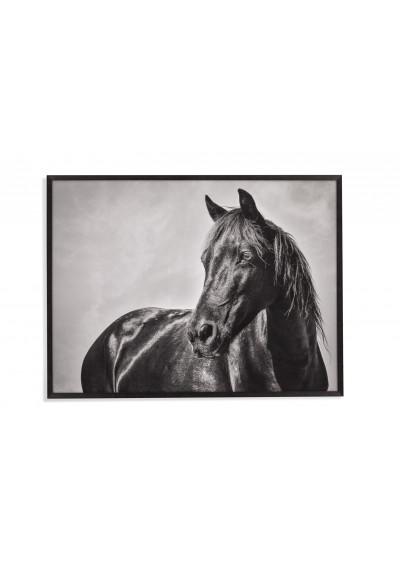 Black Horse Stallion Framed Photo Wall Art