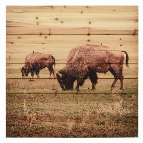 Grazing Buffalo on Paneled Wood Planks
