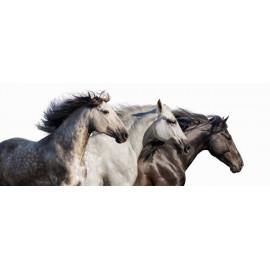 Side by Side Horses - Frameless Free Floating Tempered Art Glass